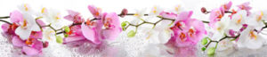 AF 48 - Нежные орхидеи